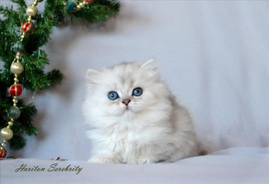 bébé Noël.jpg