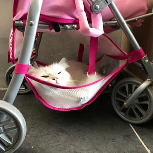 la poussette pour endormir les chats ;))