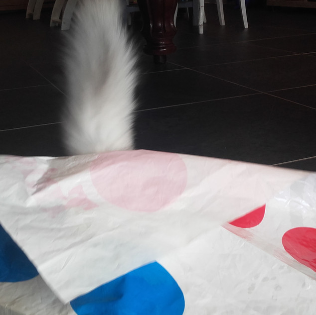 Twister édition chat