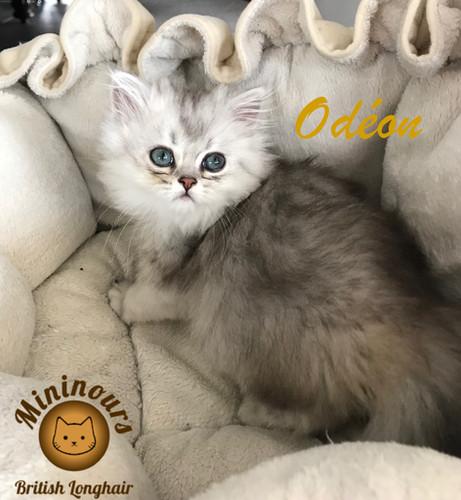Odéon_5688.JPG