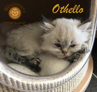 Othello_5905.JPG