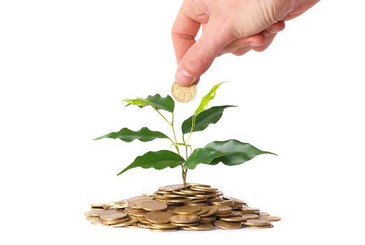 money_tree.png