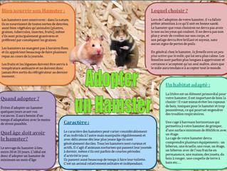 Hamster ou Rat ?