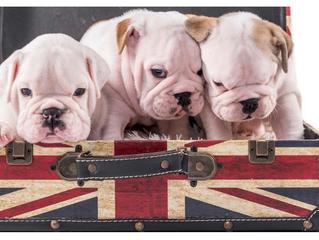 Brexit : des conséquences pour le voyage des animaux de compagnie