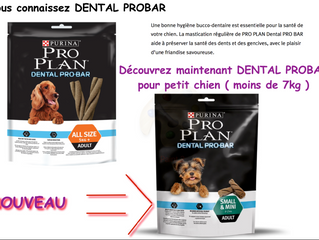 Nouveau : DENTAL PROBAR Small & Mini