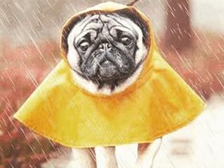 Nos animaux font ils la pluie et le beau temps?