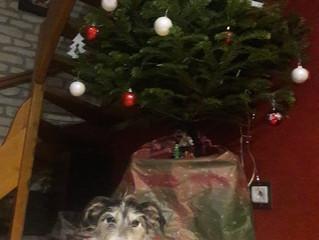 Les fêtes de fin d'année et nos animaux : stress et dangers