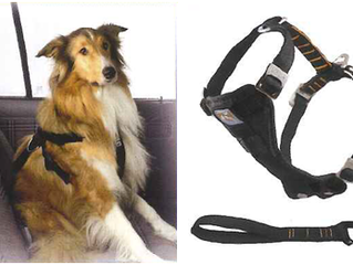 Les accessoires pour le transport de votre chien
