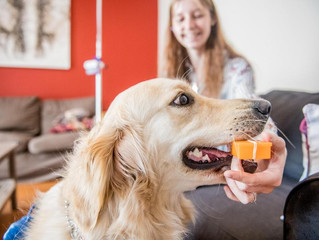 Gaïa, le chien belge qui détecte l'épilepsie