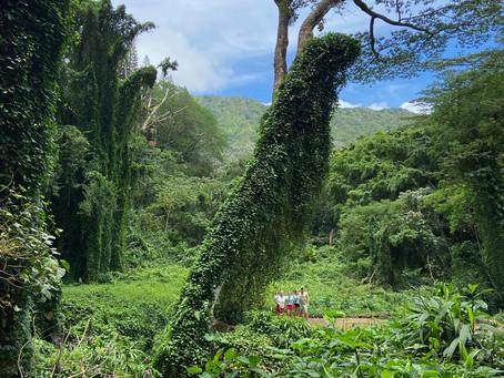 🌺 Sommerferien - Hawaii - Blogbirthday 🌺
