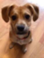 PuppyBella1.jpg