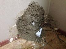 Termite mudding