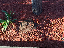 Termite Nest Mound