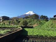 富士山サンガ