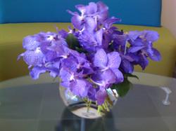 Venda Orchids in fishbowl