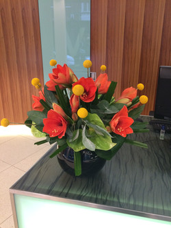 Amaryllis fishbowl design