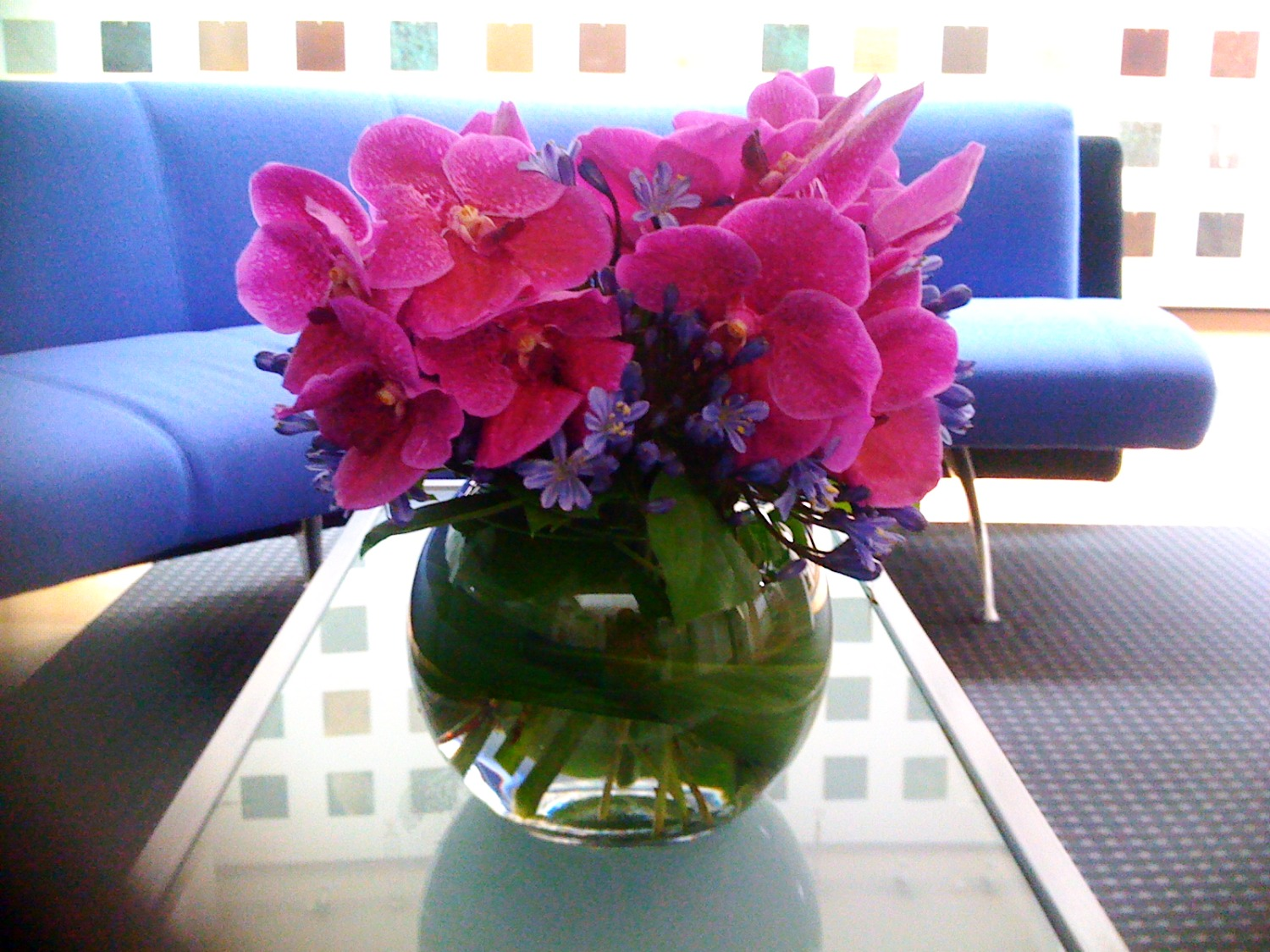 Vanda orchids in a fishbowl