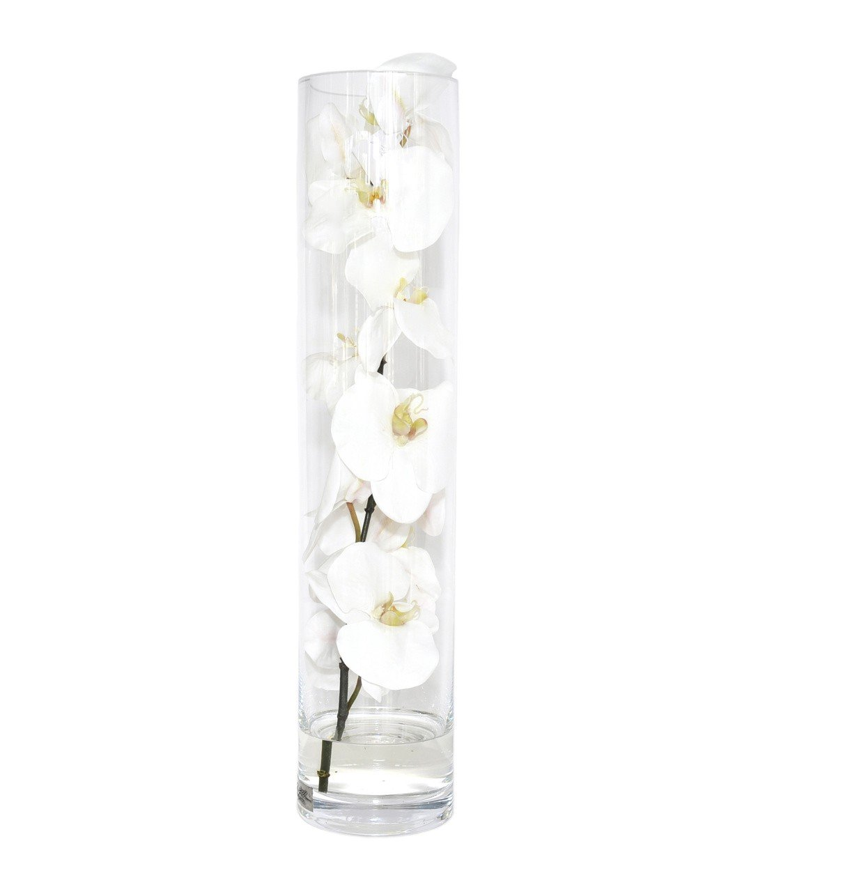 Phalaenopsis orchids in a cylinder