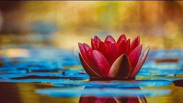 Red lily Landscape.jpg
