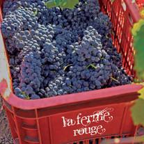 Harvest time at La Ferme Rouge