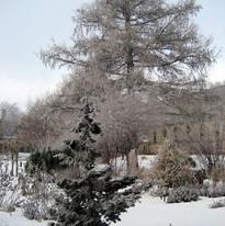 winter-garden-ice-cover.jpg