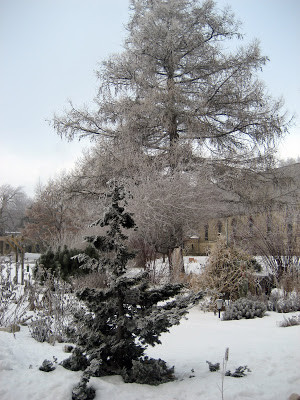 winter-garden-ice-cover.jpg