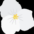 Fleurseule (G).png