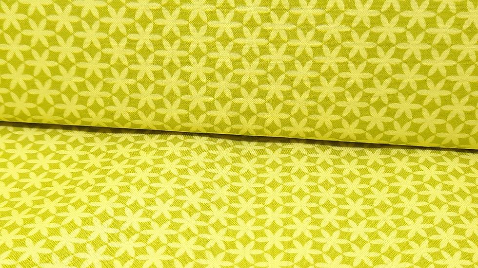 Holly Citrine Jennifer Paganelli, stjerneblomst okergul, 0,5 meter