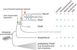 Pax4-6-10-Scenario-Feiner14-Fig