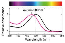 RHOspectrum-Rt-Cp-Spectrum-margin