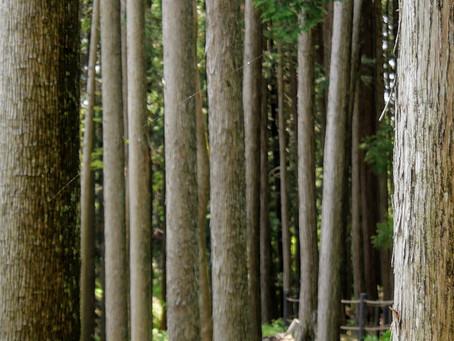 Tree-thinkers?