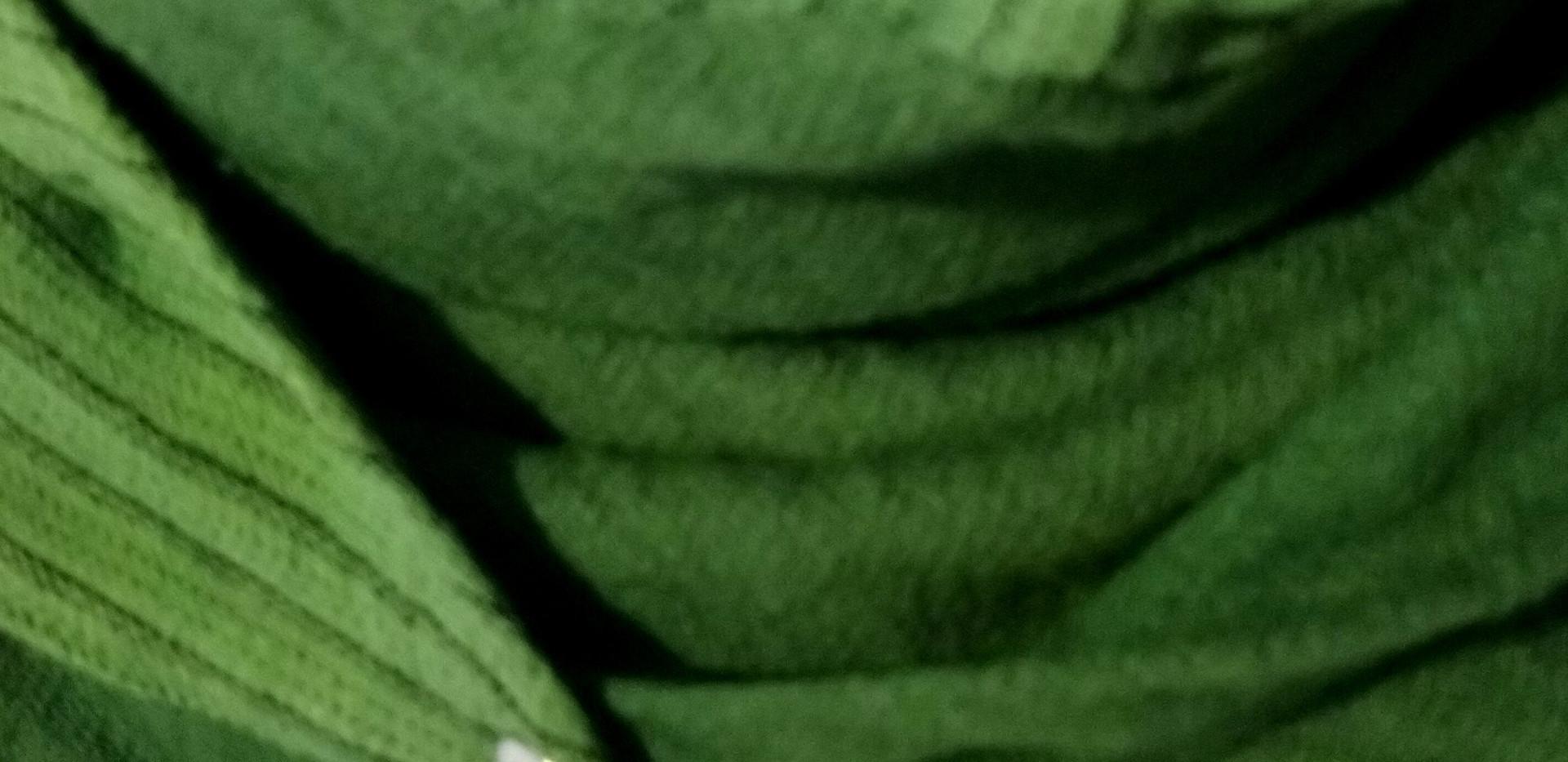 Détails Foulard Astucieux Green