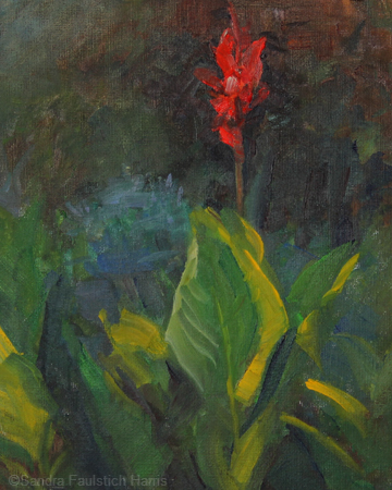 Red Canna 10 x 8 oil