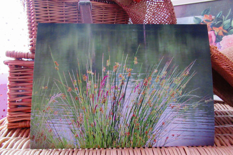 Rushes - Lower Lake DVCP