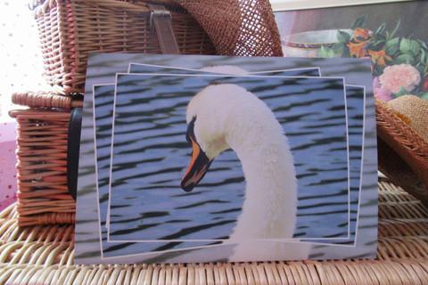Swan - DVCP
