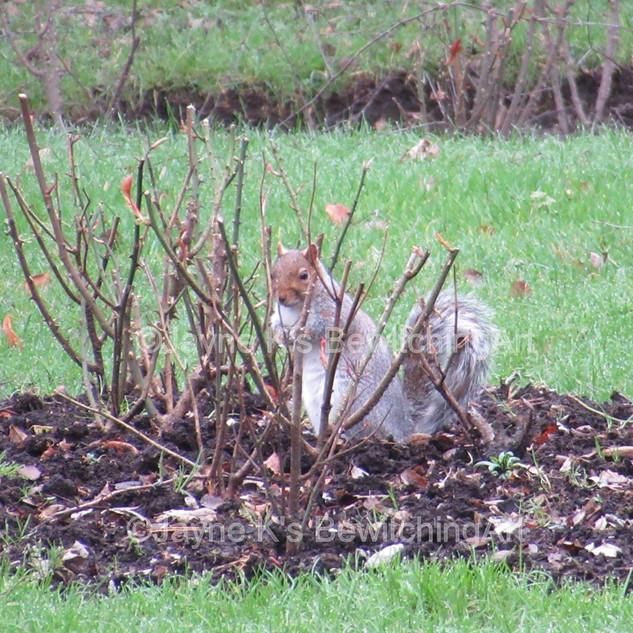 Aberdare Park Squirrel