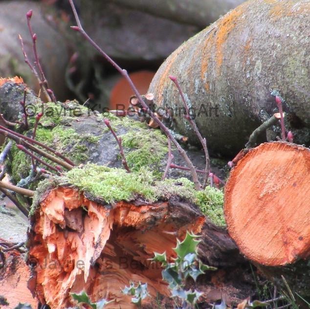 Winter Colours, Aberdare Park.