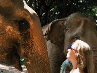 | Elephant Nature Park, Chiang Mai, Tailândia | #convidadanomapa