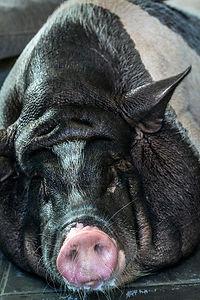 Bed & Ink Hostel Pig