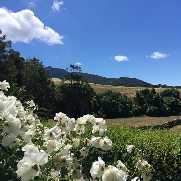 Cortijo El Aguilon, Luxury Villa Tarifa: The Garden Suite Views