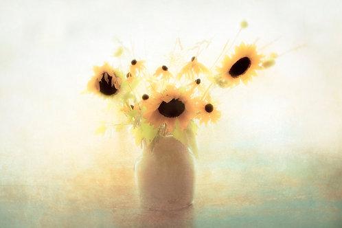 Sunflower in Window