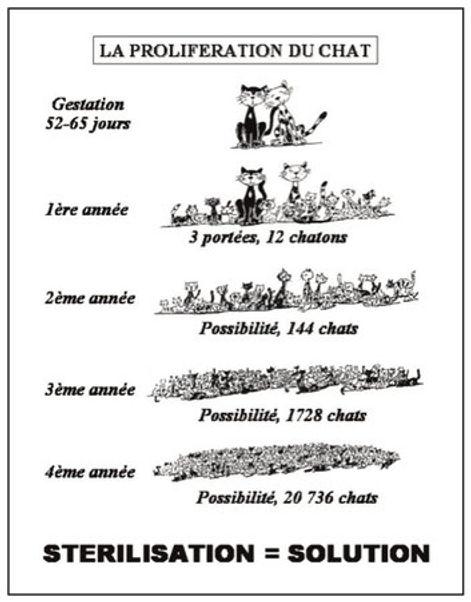 prolifération_du_chat.jpg