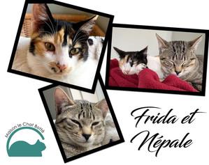 Frida & Népale