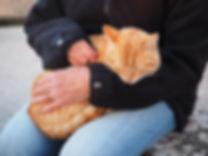 cat-1090145.jpg