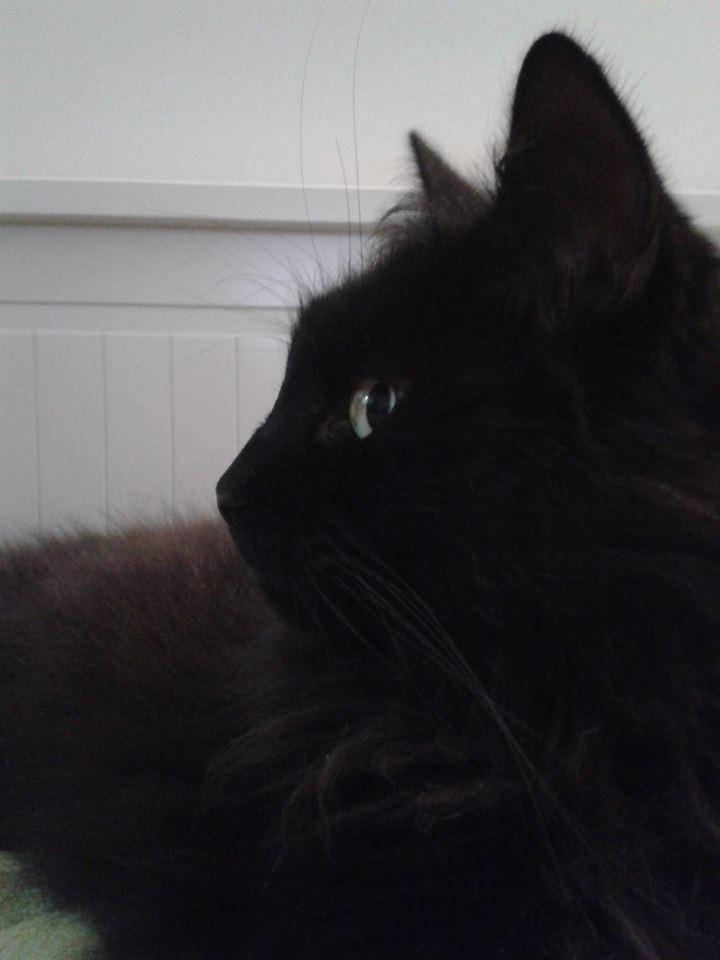 Maison le chat botte - colin vrai.jpg