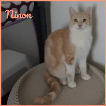 Ninon, mâle, 2 ans