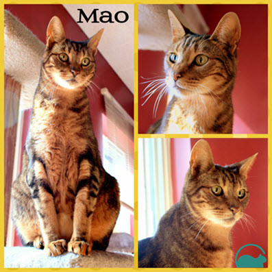 Mao - Maison le Chat Botté