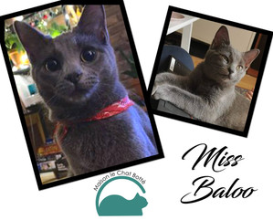 Miss Baloo