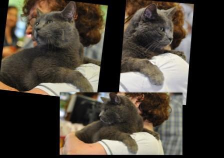 Maison le Chat Botte - Mr Gilles1.jpg