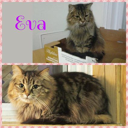 Eva - Maison le Chat Botté - Montréal